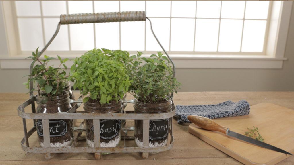 огород на кухне, альтернативные горшки , фото